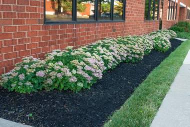 Landscape Maintenance in Clarksville, MD