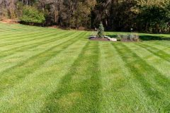 Landscaping Services in Glenelg