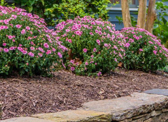 Residential Landscape maintenance in Ellicott City, MD